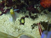 うおっち&ももの海水魚日記-タマゴは巣穴に・・・1