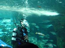 うおっち&ももの海水魚日記-人間とフグ