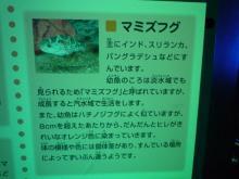 うおっち&ももの海水魚日記-フグ12