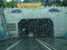 うおっち&ももの海水魚日記-関門トンネル1