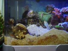 うおっち&ももの海水魚日記-60cm