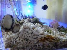 うおっち&ももの海水魚日記-パクパクと貝