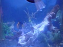 うおっち&ももの海水魚日記-ココス
