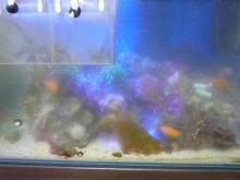 うおっち&ももの海水魚日記-曇り水槽