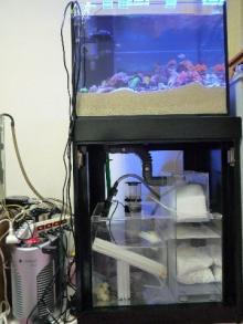 うおっち&ももの海水魚日記-60cmOF全体