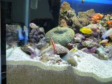 うおっち&ももの海水魚日記-60cm左側