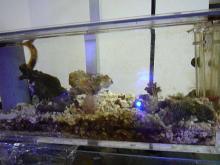 うおっち&ももの海水魚日記-AB1