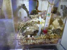 うおっち&ももの海水魚日記-AB2