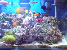 うおっち&ももの海水魚日記-90cm1