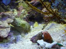 うおっち&ももの海水魚日記-タマゴジョー
