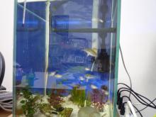 うおっち&ももの海水魚日記-30cm2