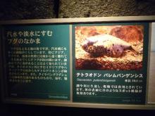 うおっち&ももの海水魚日記-ボード