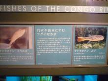 うおっち&ももの海水魚日記-ボード2