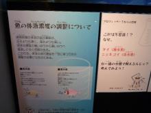 うおっち&ももの海水魚日記-bo-do 3