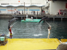うおっち&ももの海水魚日記-シーパラ8
