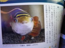 うおっち&ももの海水魚日記-本3