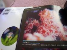 うおっち&ももの海水魚日記-本5