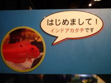 うおっち&ももの海水魚日記-5