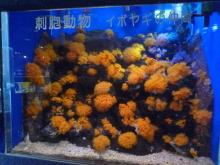 うおっち&ももの海水魚日記-13