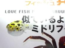うおっち&ももの海水魚日記-雑誌3