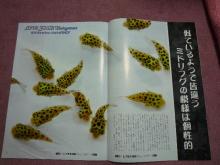 うおっち&ももの海水魚日記-雑誌4