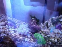 うおっち&ももの海水魚日記-バブル2