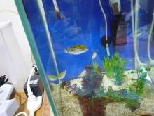 うおっち&ももの海水魚日記-ウッド4