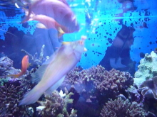 うおっち&ももの海水魚日記-90cmOF