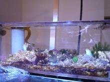 うおっち&ももの海水魚日記-'09-12-02 上部AB