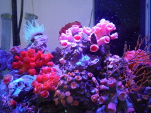 うおっち&ももの海水魚日記-陰日性