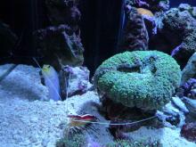 うおっち&ももの海水魚日記-60cm1