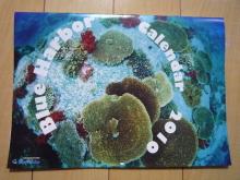 うおっち&ももの海水魚日記-カレンダー1