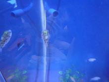 うおっち&ももの海水魚日記-30cm3