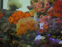 うおっち&ももの海水魚日記-砂2