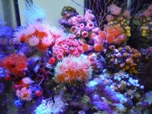うおっち&ももの海水魚日記-LED1