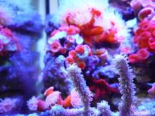 うおっち&ももの海水魚日記-ヤギ2