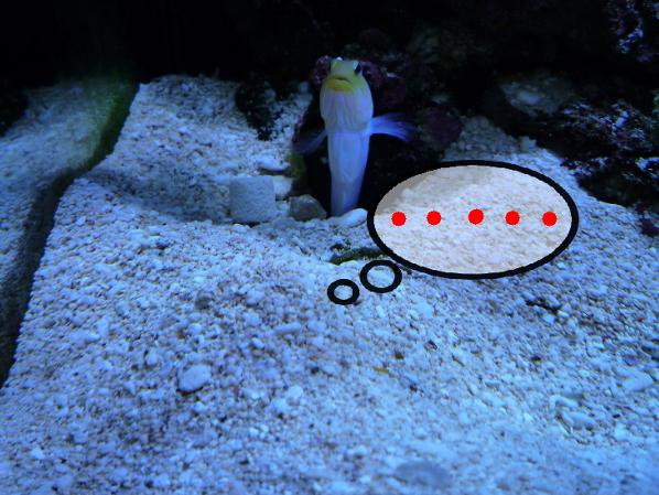 うおっち&ももの海水魚日記-オーシャン君2