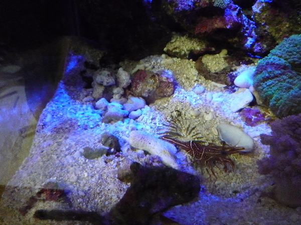 うおっち&ももの海水魚日記-巣穴