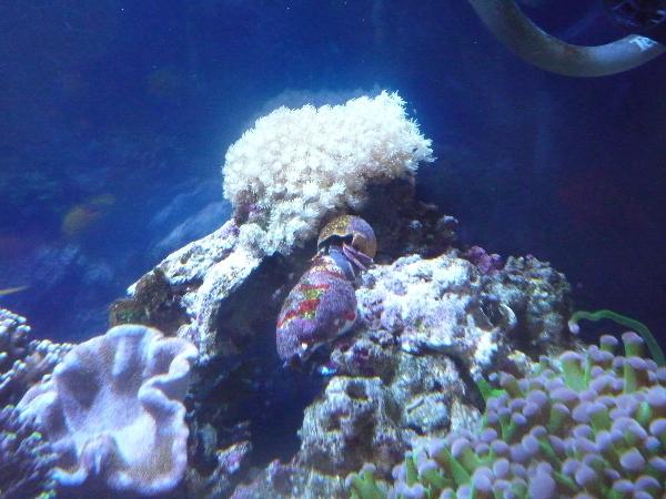 うおっち&ももの海水魚日記-1サンゴ