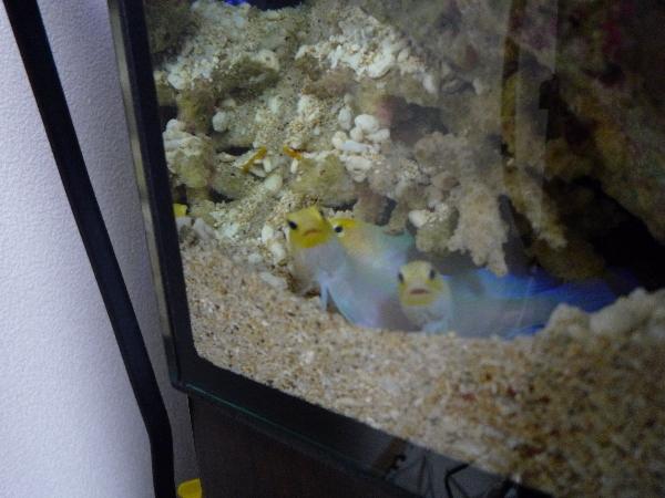 うおっち&ももの海水魚日記-3匹2