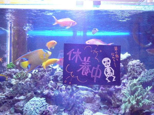 うおっち&ももの海水魚日記-休養中