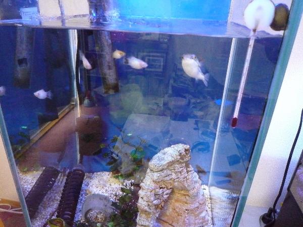 うおっち&ももの海水魚日記-kisui
