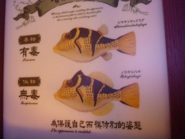 うおっち&ももの海水魚日記-フグとハギ
