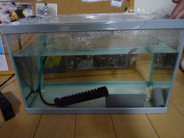 うおっち&ももの海水魚日記-水槽