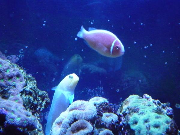 うおっち&ももの海水魚日記-ジョー5