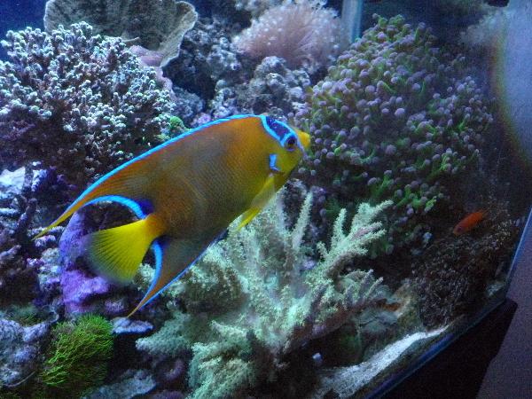 うおっち&ももの海水魚日記-90cm5