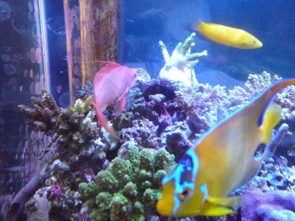 うおっち&ももの海水魚日記-サンゴ3