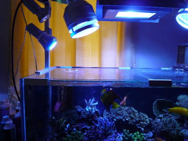 うおっち&ももの海水魚日記-LED2