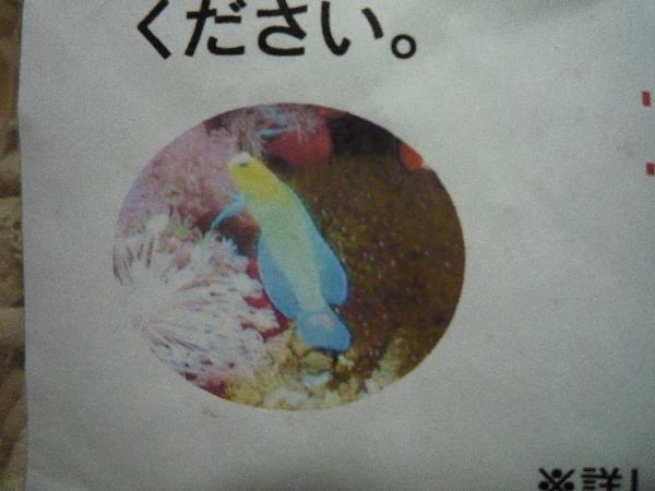 うおっち&ももの海水魚日記-買い物3