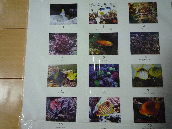 うおっち&ももの海水魚日記-カレンダー2